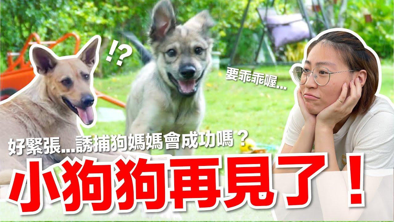 【好味小姐】小狗狗再見了!|好味貓日常EP110