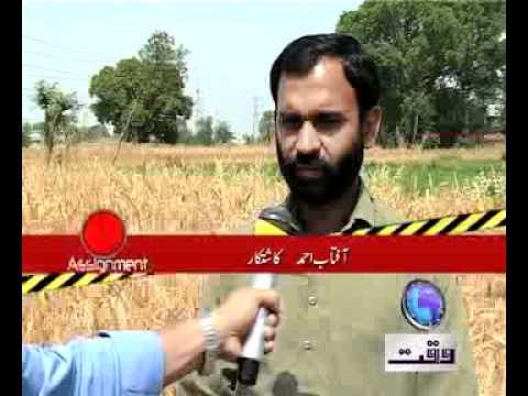 Wheat Procurement pkg by Haris Ansari
