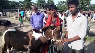 Horse price in Bangladesh / BD Life Trailer