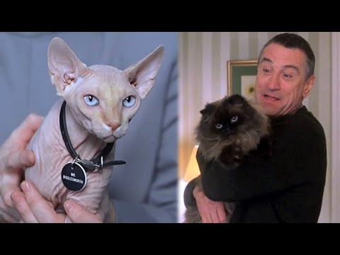 Top 10 Movie Cats