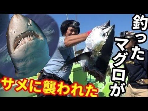 【衝撃】マグロ釣りしてたら人食いサメに襲われた!?#6