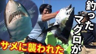 【衝撃】マグロ釣りしてたら人食いサメに襲われた!?#6 thumbnail