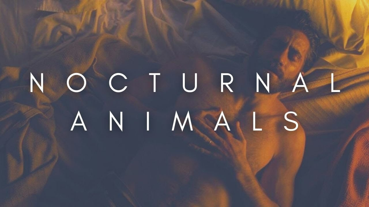 The Beauty Of Nocturnal Animals