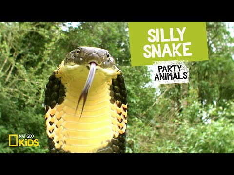 Silly Snake Feat. Parry Gripp (Music Video) 🐍   PARTY ANIMALS PLAYLIST