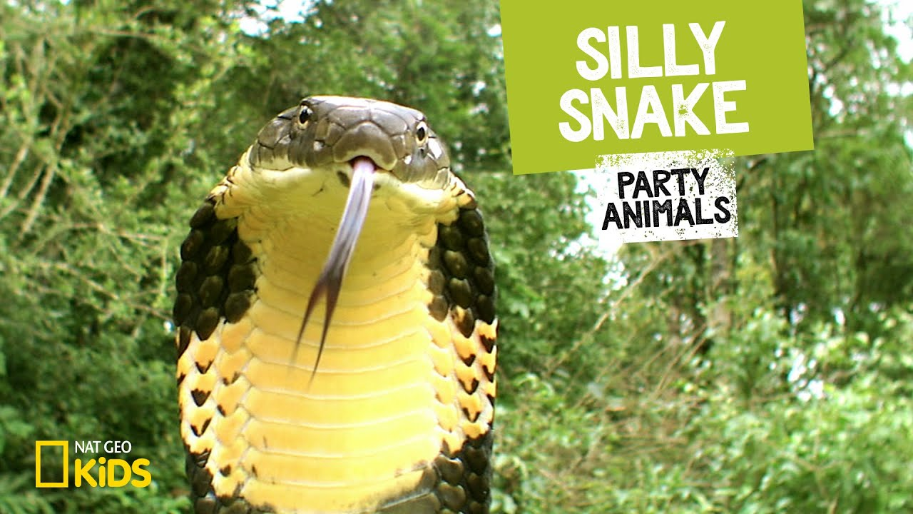 Silly Snake Feat Parry Gripp Music Video Party Animals Youtube