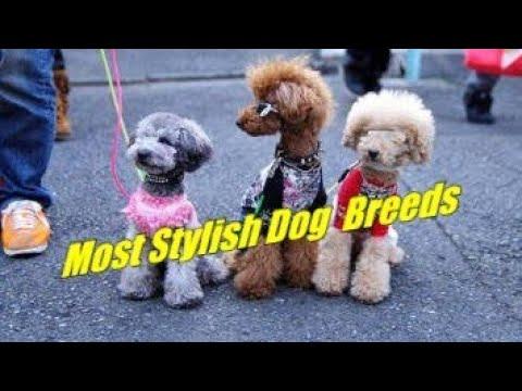 Most Stylish Dog Breeds.