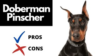 Doberman Pinscher Pros And Cons   The Good AND The Bad!!!