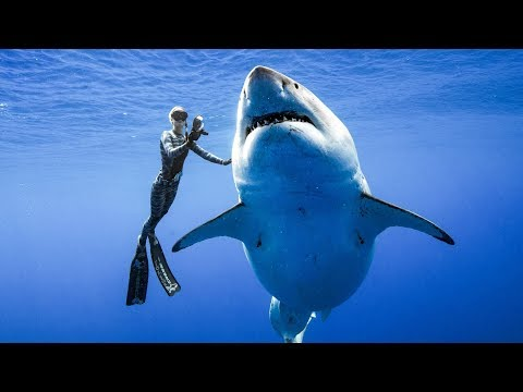 😱😱😱 SHARK FREEDIVING - Swimming With Sharks In Apnea  - Nature Adrenaline Diving Apnoe Apnee
