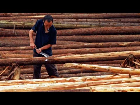 Finland eyes clean tech, wood business with China