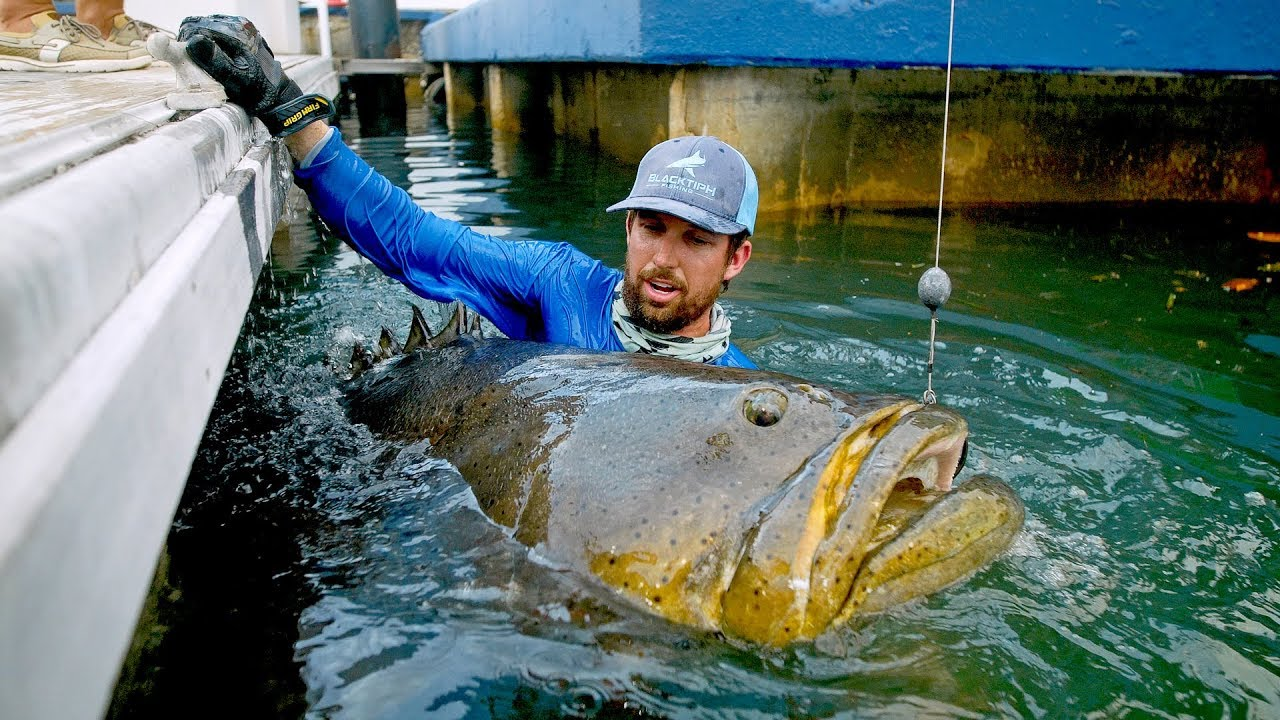 Download BIGGEST Fish Caught from a Dock