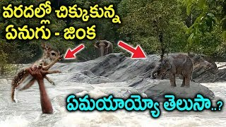 కేరళ భీభత్సం - వరదల్లో చికుకున్న వన్నె ప్రాణులు    Floods Struck By Animals    Kerala Floods Updates