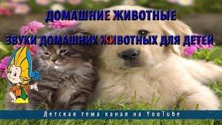 Домашние животные.Звуки домашних животных для детей