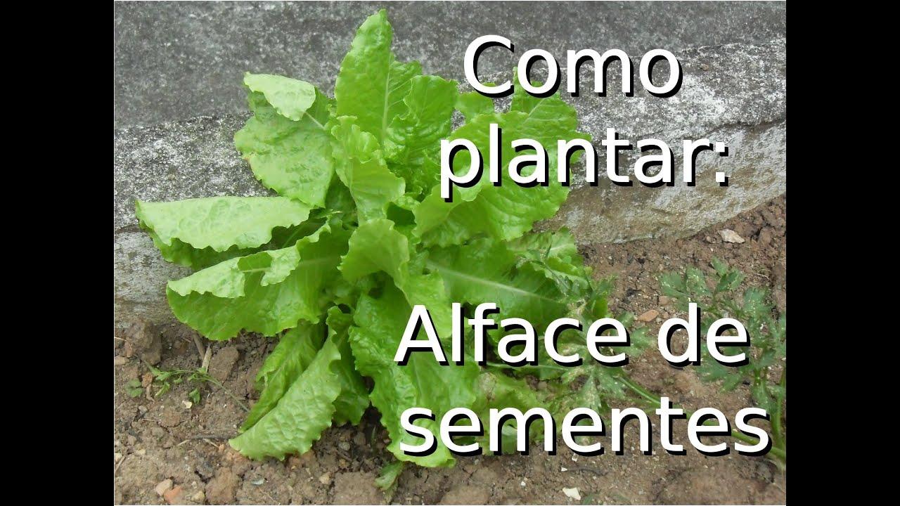 Como fazer mudas de alface a partir de sementes. - YouTube