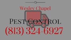 Bed Bug Control Wesley Chapel FL Removal