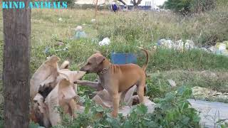 Kind Animals|Funny dogs|Lovely baby dog|sounds dogs|funny dogs.