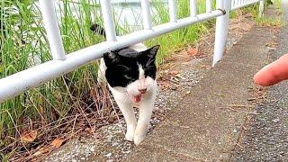 牛みたいな猫が柵の向こうからモフられに出てきた