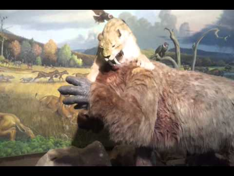 La Brea Tarpits - Creepy Animatronic Saber-toothed Cat vs. Sloth