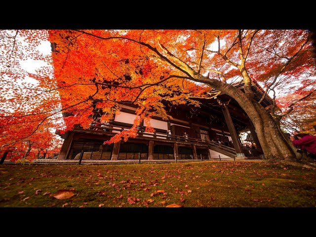 JG  HDR 京都 真如堂の紅葉(重文) Kyoto,Shinnyodo(Cultural Property)