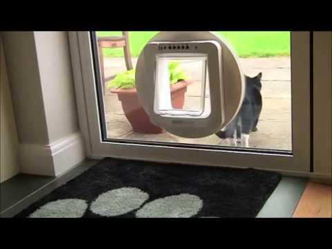 Sureflap Microchip Pet Door Youtube