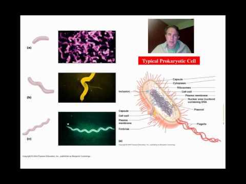Bacterial Morphology Part 1