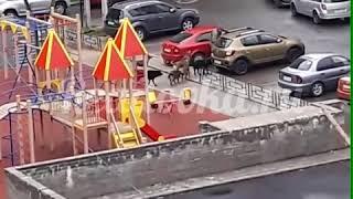 Бродячие собаки в Смоленске нападают на людей.