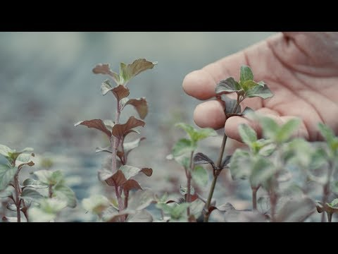 Le CNRS à VivaTech : Bio Inspir', la dépollution par les plantes