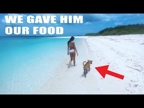 WE FOUND ABANDONED DOG ON TINY ISLAND
