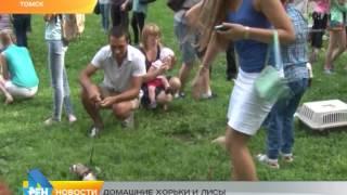 Сюжет от 27.07.2015 домашние хорьки и лисы
