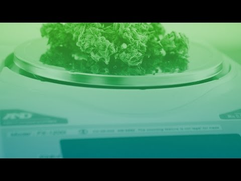 Opportunities for Alcoholic Drinks and Tobacco in Legal Cannabis in the US