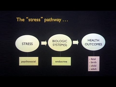 Transgenerational Effects of Maternal Stress and Nutrition