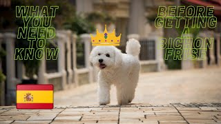 Getting To Know Your Dog's Breed: Bichon Frise Edition