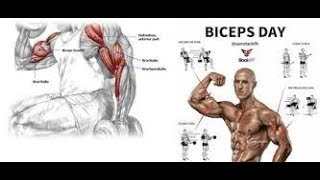 Gain big thick biceps in few weeks follow this workout for big biceps, DESI DWAKHANA