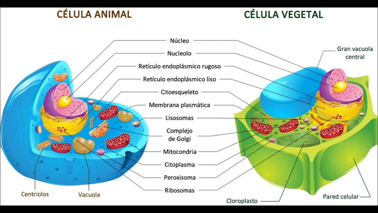 ORGANELOS DE LA CELULA VEGETAL EBOOK