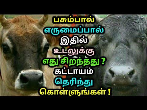 பசும்பால் எருமைப்பால் இதில் எது சிறந்தது ? கட்டாயம் தெரிந்து கொள்ளுங்கள் ! Cow milk vs buffalo milk