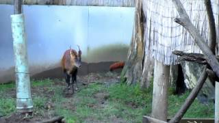 A day at Sequoia Park Zoo
