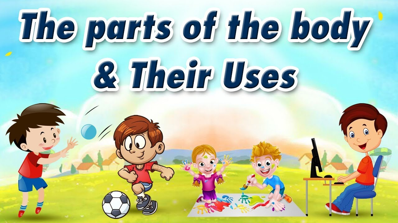 The parts of the body and Their Uses | Educational Videos For Kids