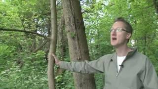 Elm - The Tree of Death