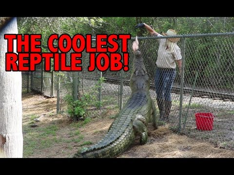 THE COOLEST REPTILE JOB!