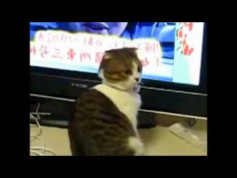 Dramatic Cats Compilation