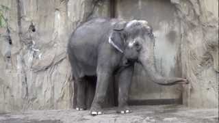 Funny Elephants in Portland Oregon Zoo