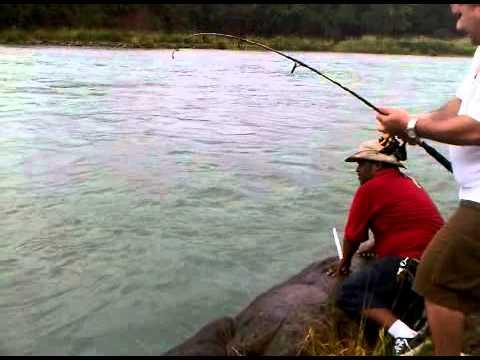 Pesca De Sabalo En Panama, Rio Chagres Colon