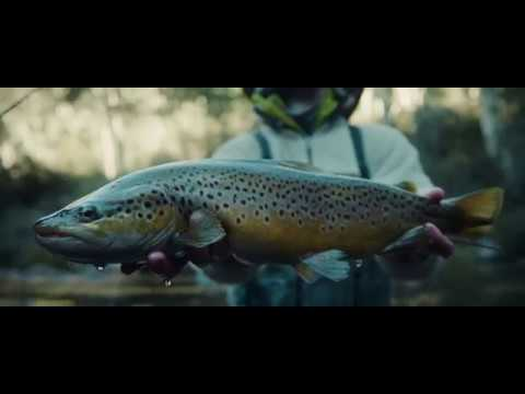 Fly Fishing Australia EP 1: Snowy Mountains