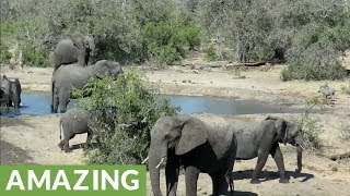 grumpy-elephant-chases-thirsty-warthogs-away-from-watering-hole