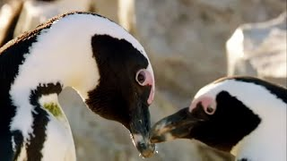 Best of Penguins | Top 5 | BBC Earth