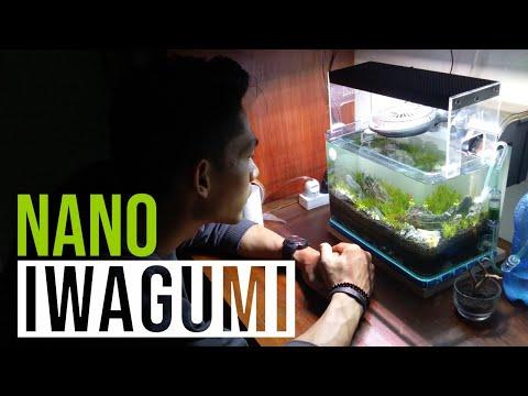 amazing-iwagumi,-nano-iwagumi-style-aquascape-indonesia-2020
