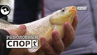 Фото Как работает хорошая прикормка | Рыболовный спорт