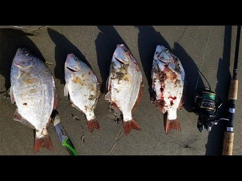Oregon Surf Fishing Tournament Update