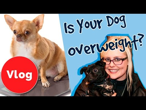 How to Tell If Your Dog is Overweight