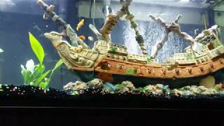 The Chill Tank, ASMR Classical Music Relaxation Fish Tank