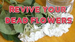 How to Revive Dead Flowers